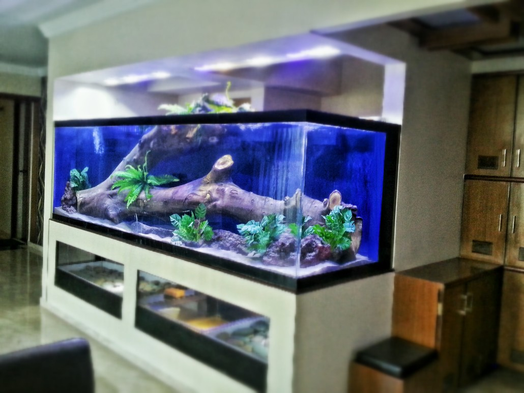 Residential aquariums in india madoverfish for Large aquarium fish