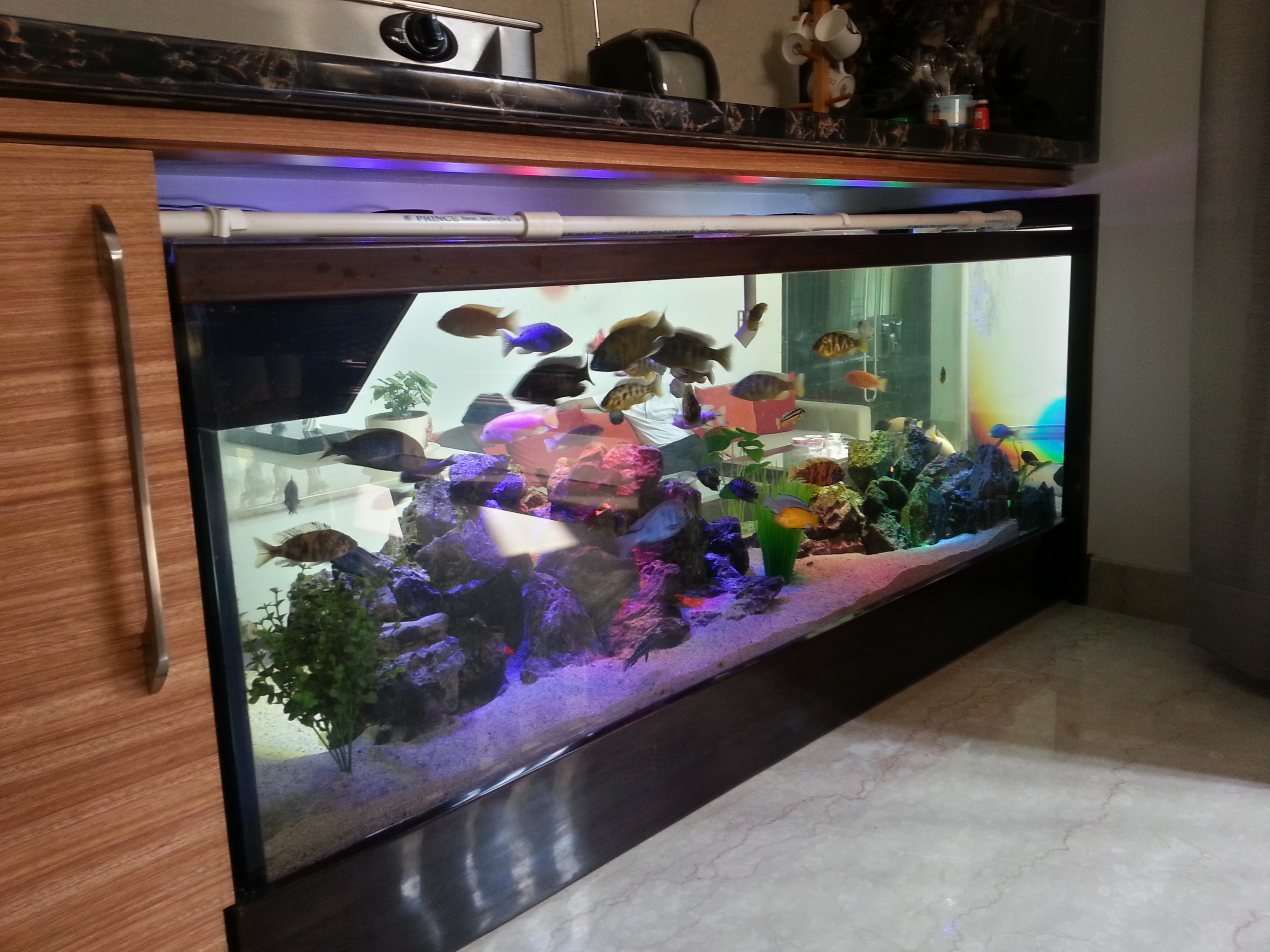 Easy maintenance fish tank jobs my tank at work Fish for jobs