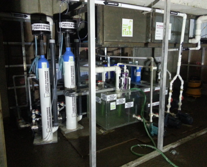 best aquarium filtration units india