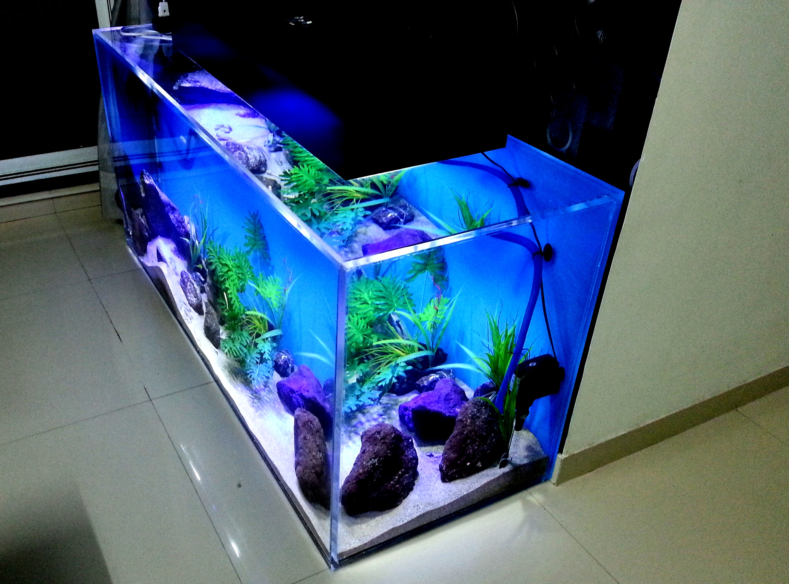 Fish aquarium price india - Resonating Simplicity Custom Aquariums