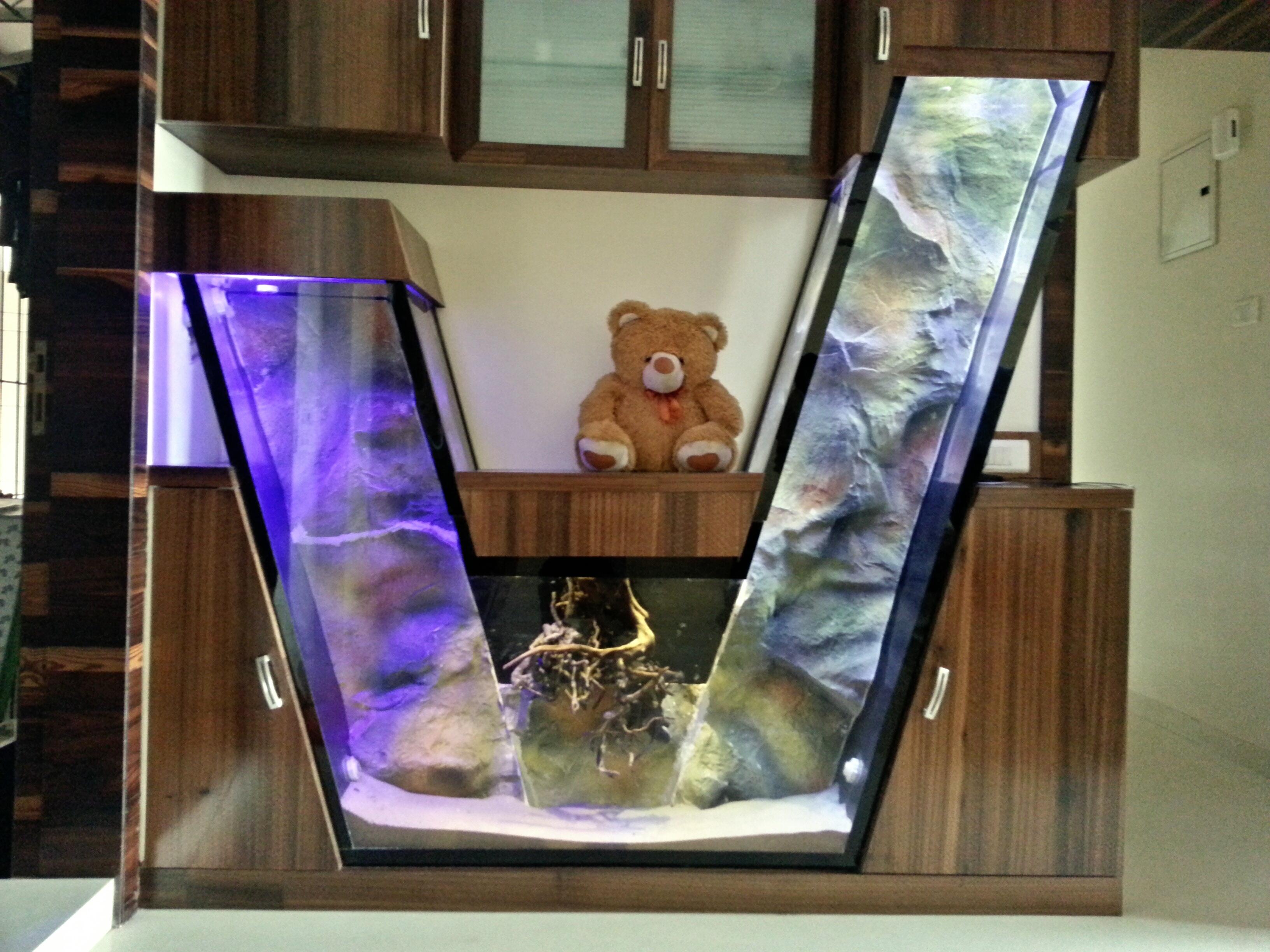amazing aquarium shapes and designs