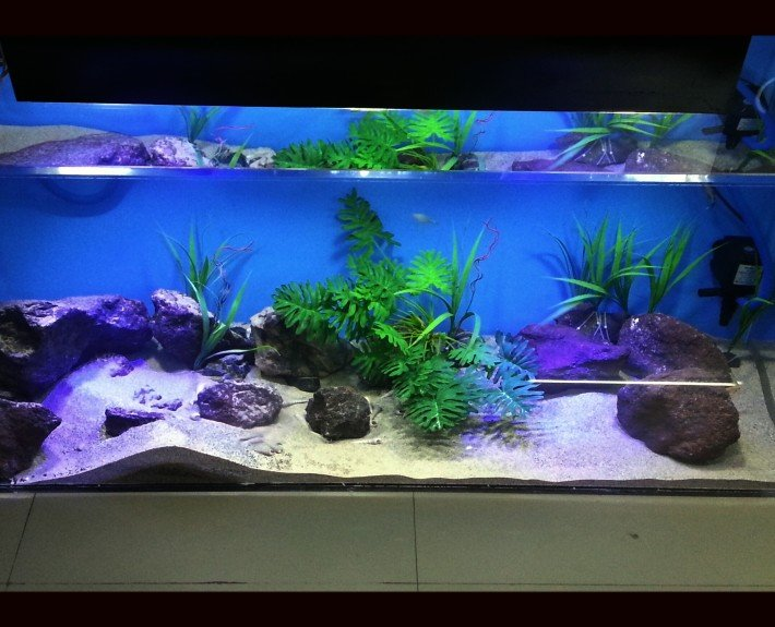 Madoverfish brings you ultimate simplicity in keeping Aquariums without compromising on luxury