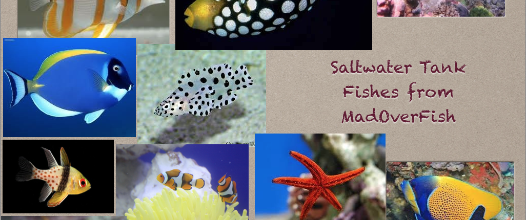 Live fish stock madoverfish aquariums water arts company for Live saltwater fish for sale