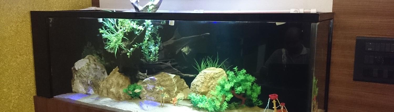 simple elegant aquarium