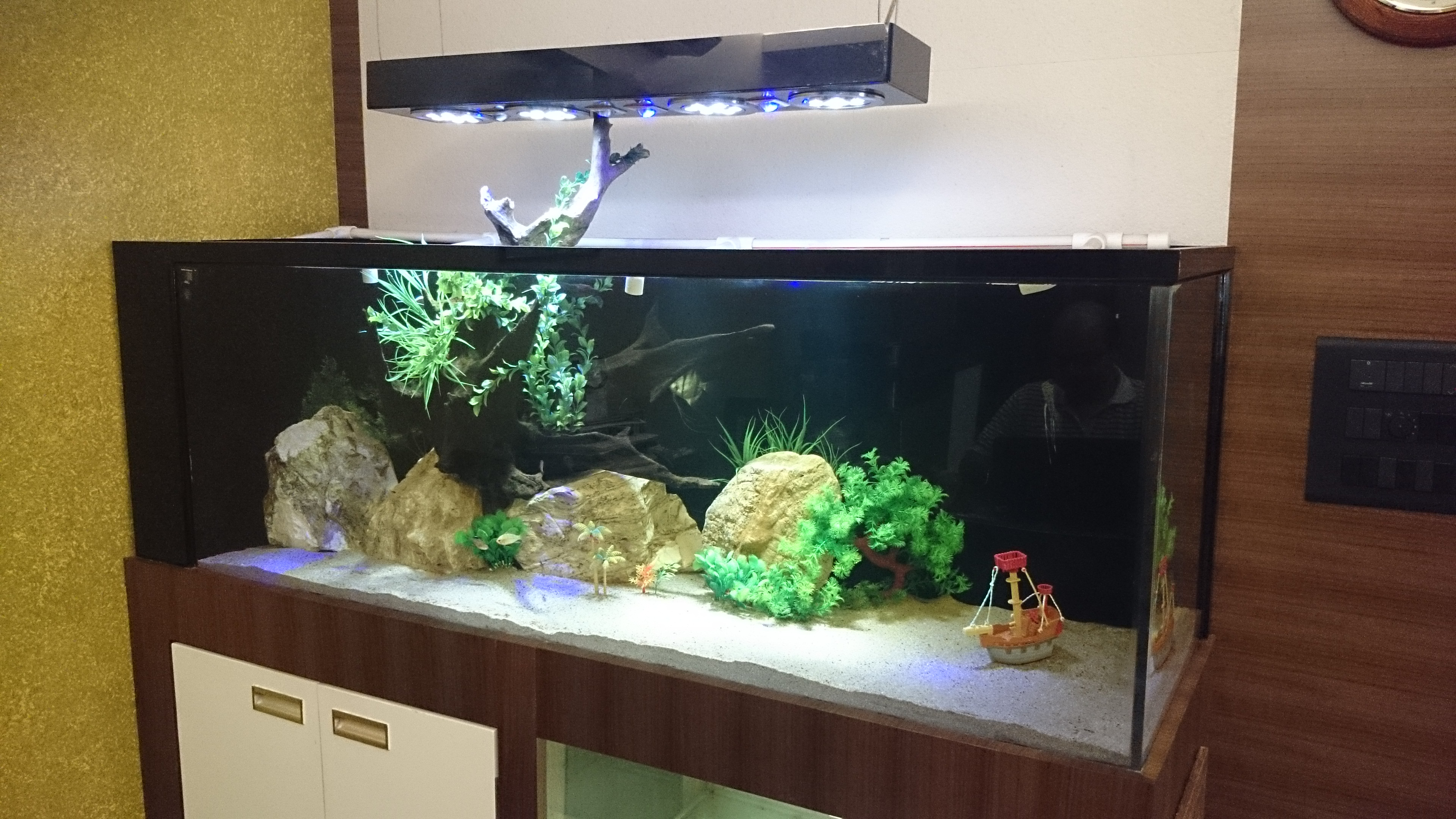 simply elegant aquarium madoverfish aquariums water arts company