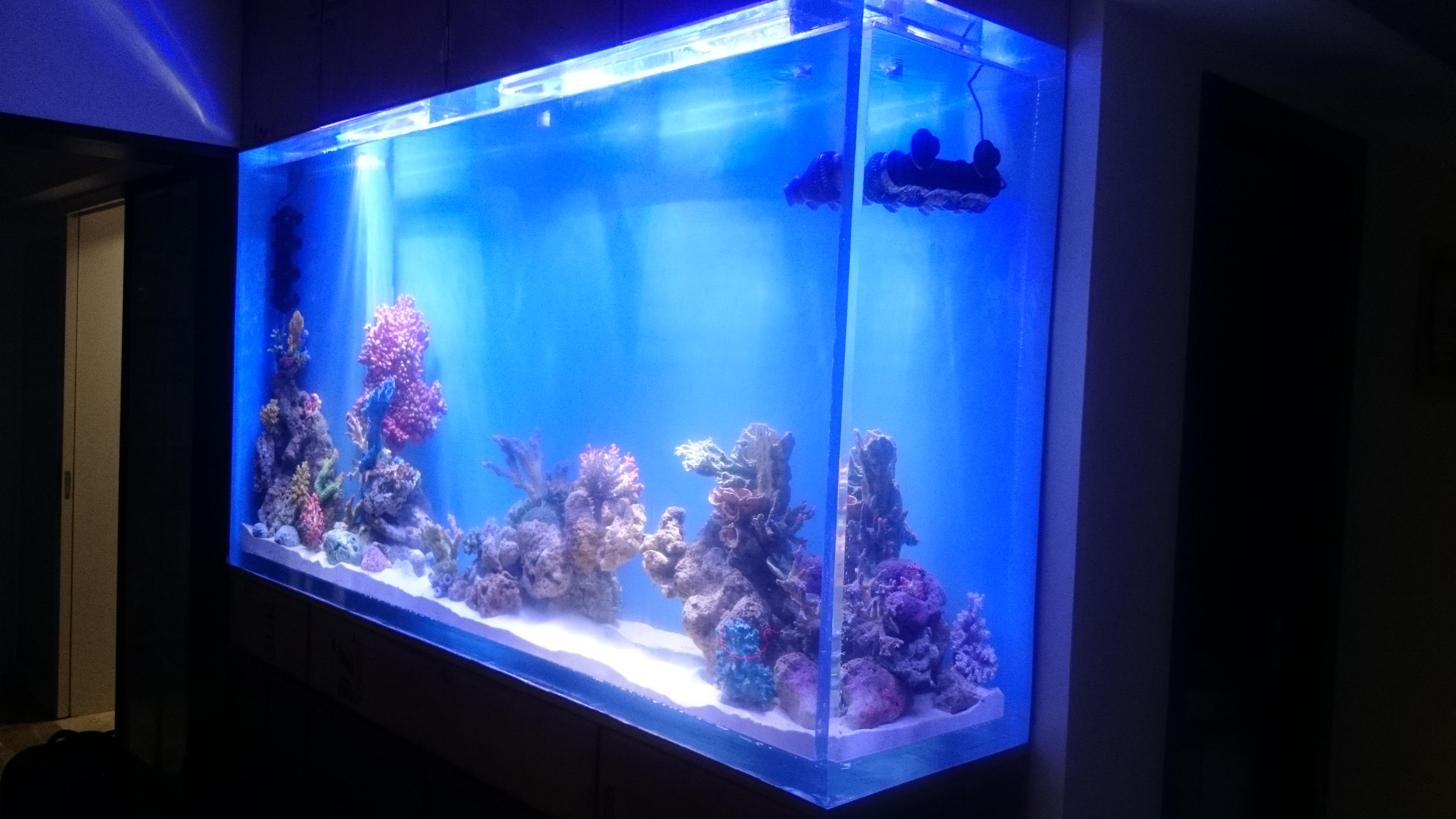 Acrylic aquarium in residence for Acrylic vs glass fish tank