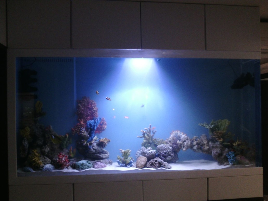 Acrylic aquarium in residence for How to build an acrylic fish tank