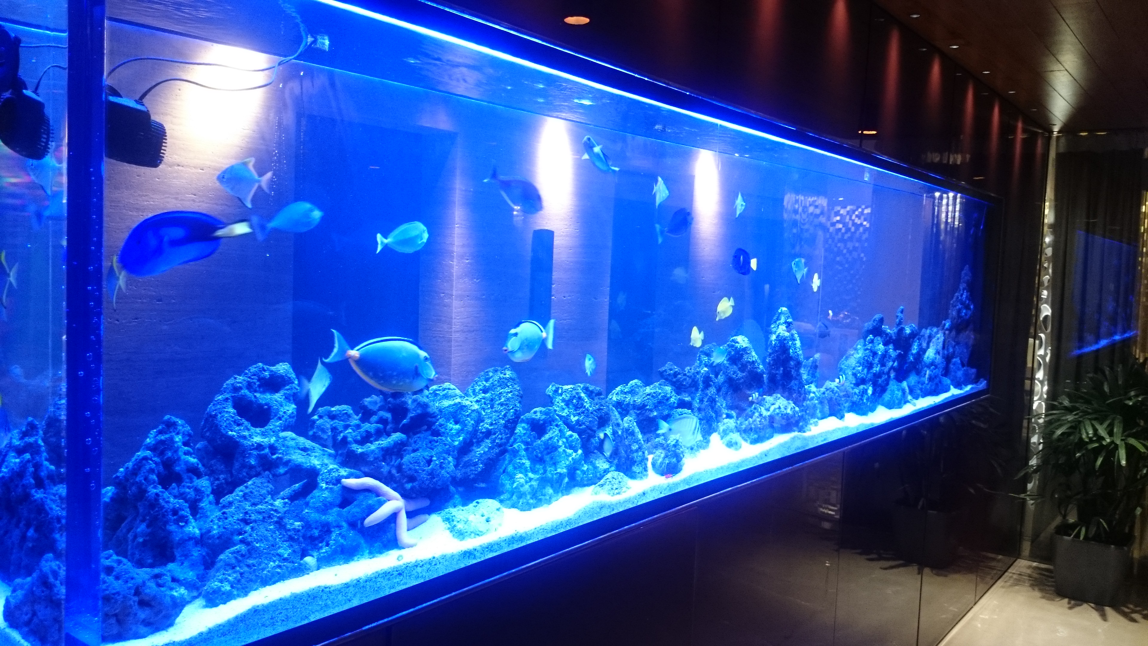Best Custom Aquarium Company In India