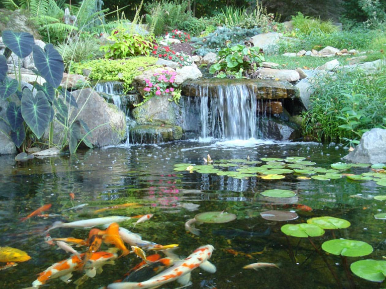 Ecosystem pond 02 madoverfish aquariums water arts company for Best koi pond design 2017