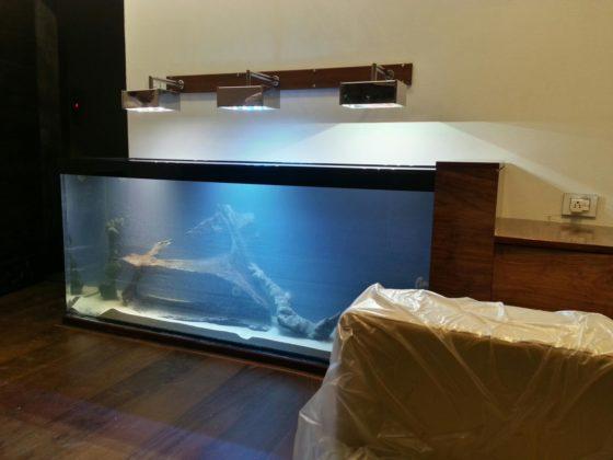Aquariums for home