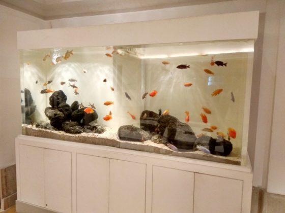 Residential Aquariums Madoverfish